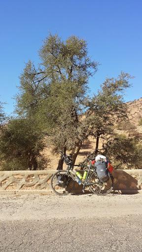 Copacii de argan