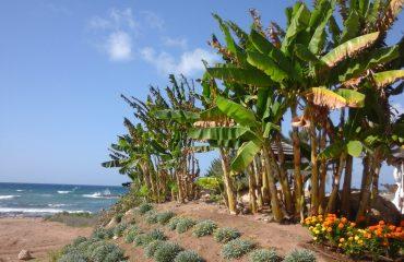 Plaje cipriote