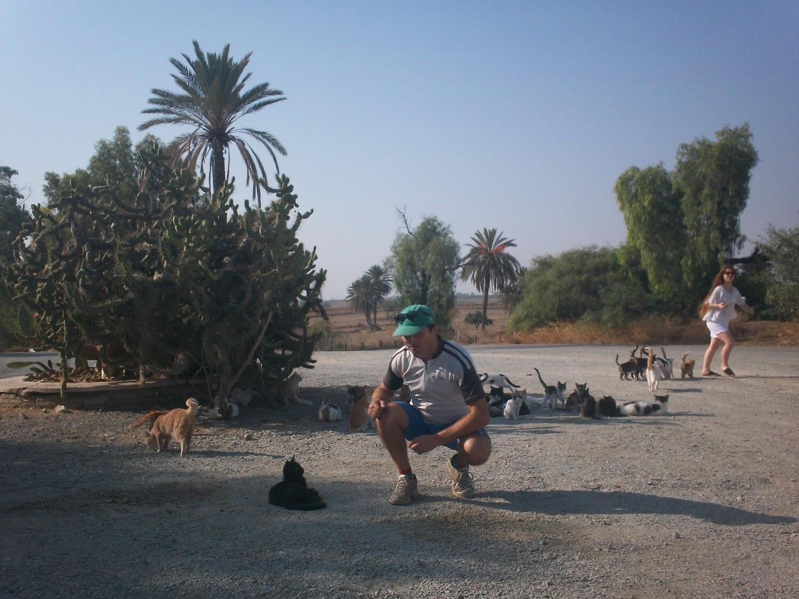 Cipru-paradisul pisicilor
