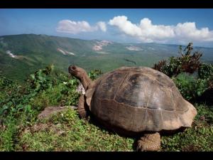 Broasca țestoasă de Galapagos