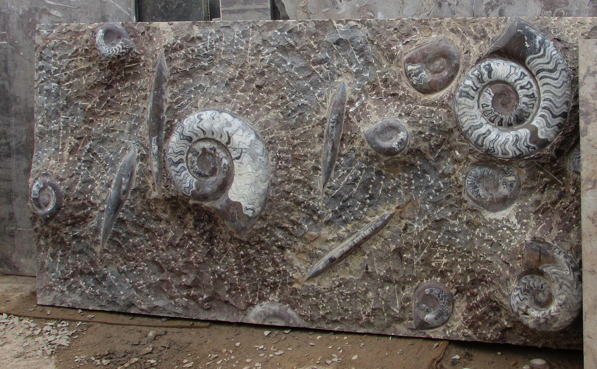 fosilles-erfoud