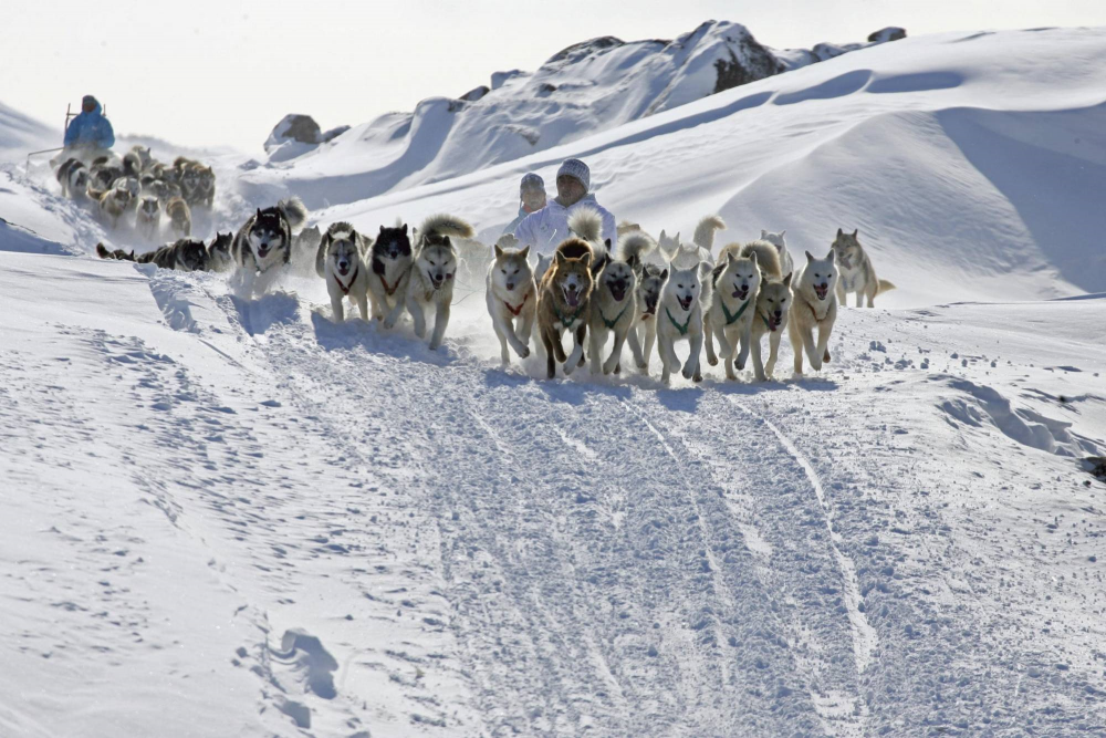 Mushing in Groenlanda