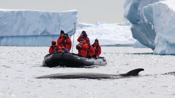 Cu barcile zodiac in apropierea balenelor