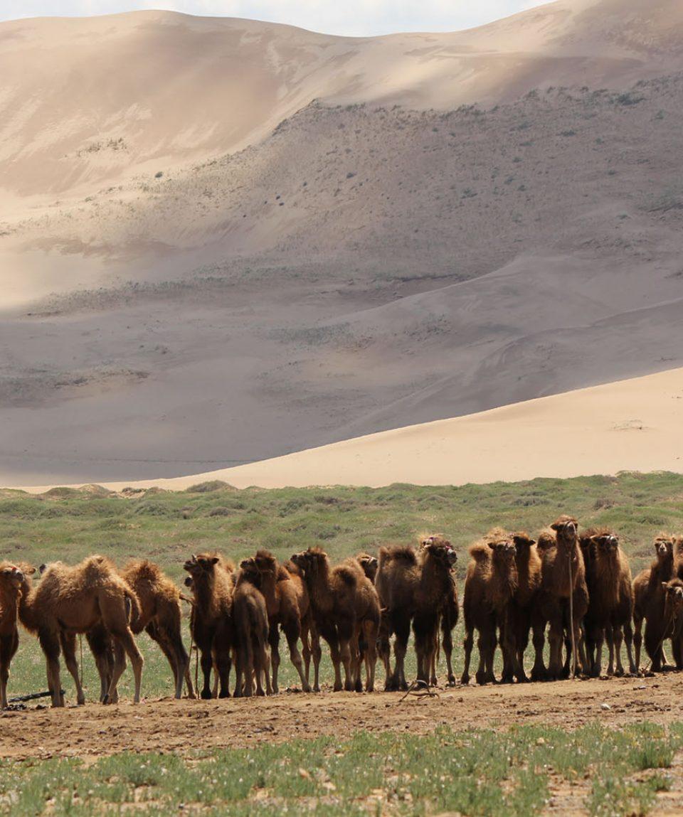 Gobi-desert-and-Karakorum