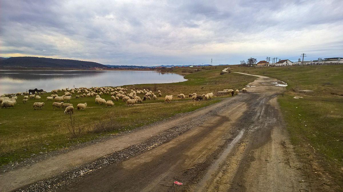 Drum pe lângă Lacul Dumbrăvița
