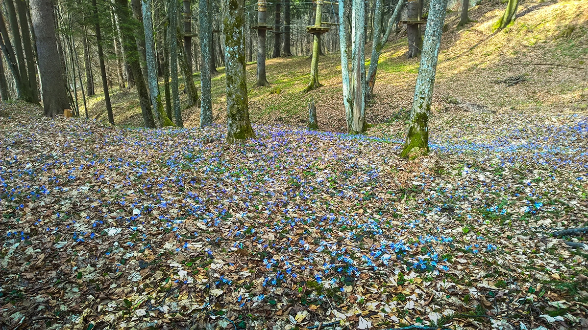 Flori în Băile Balvanyos