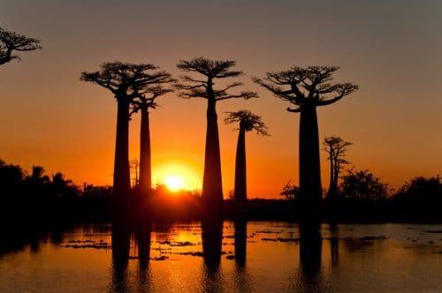 Apus de soare cu baobabi