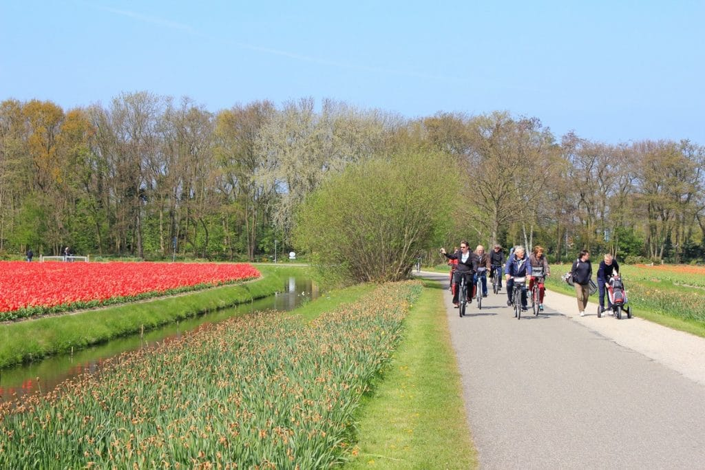 Bicicliști prin Olanda