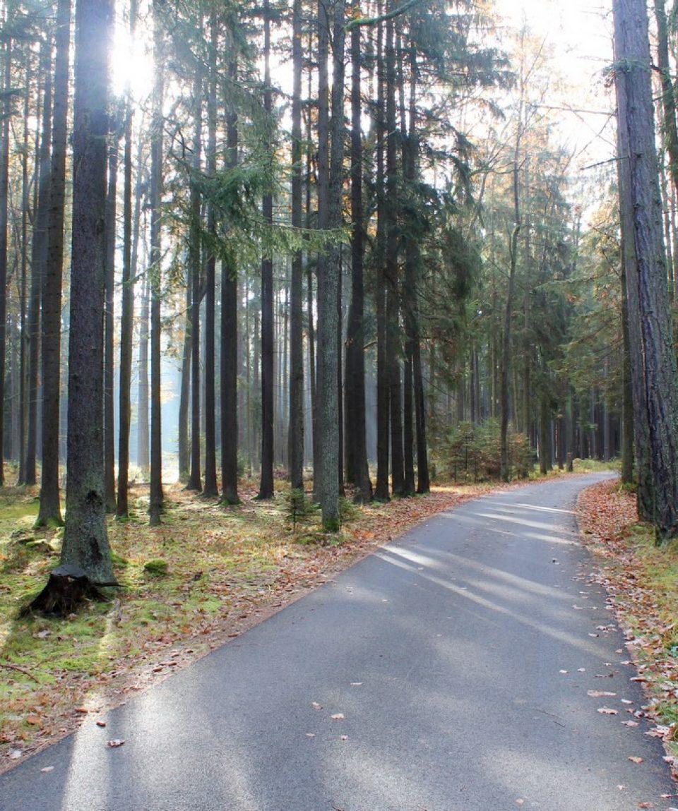 Padure din Cehia