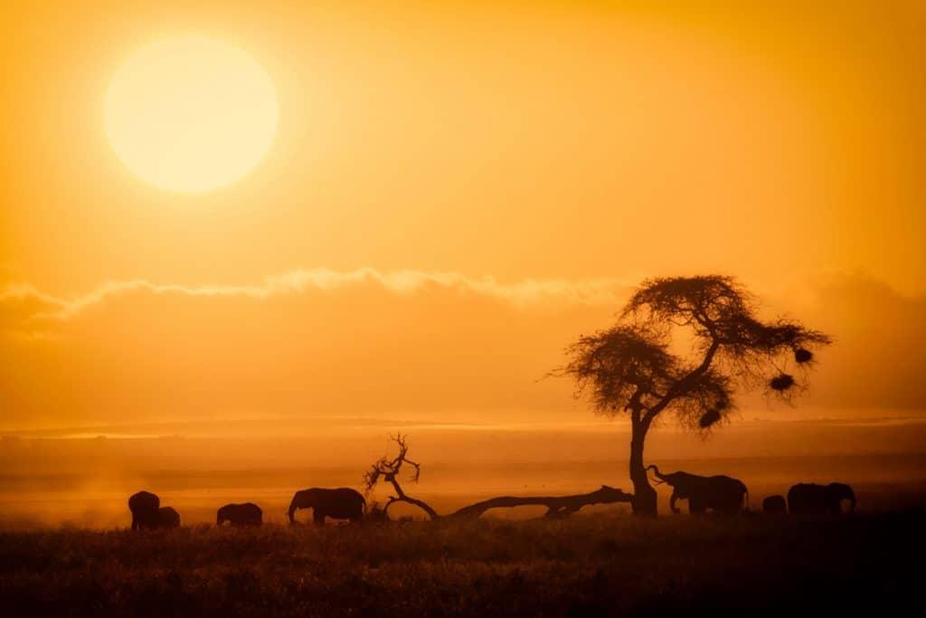 Safari în Kenya - Amboseli