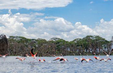 Lacul Naivasha