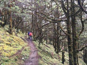 Potecă prin pădure în Bhutan