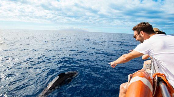 Balena pilot in Tenerife