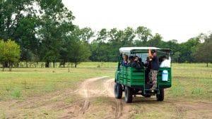 Cu mașina de safari prin pădurea Letea