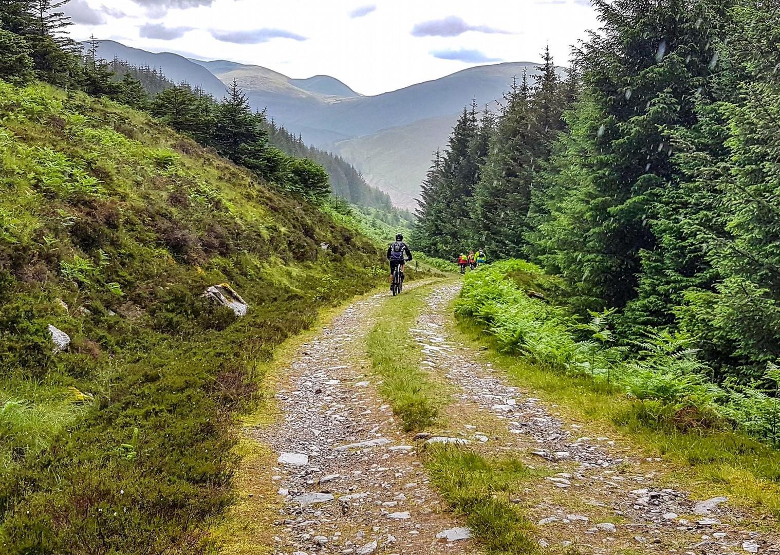 Pe un drum forestier din Scoția