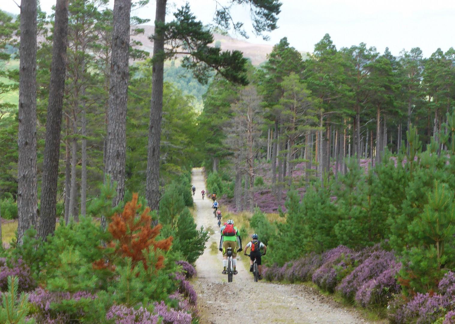 Scoția pe bicicletă - prin pădure