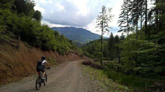 Drumul forestier Crucur