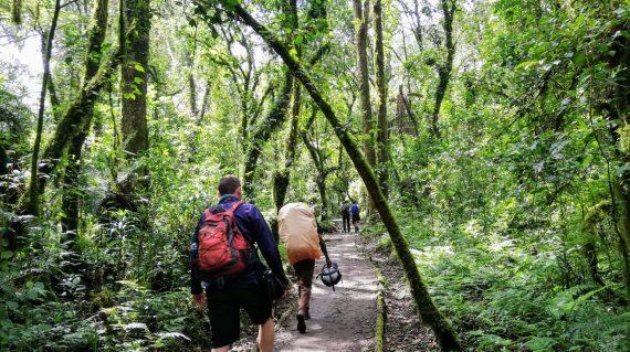 Prin pădurea tropicală