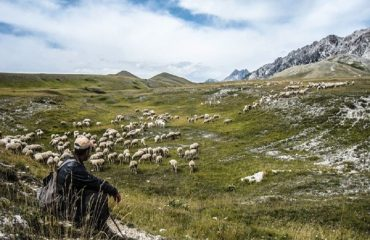 Pe urmele transhumantei din Italia (1)